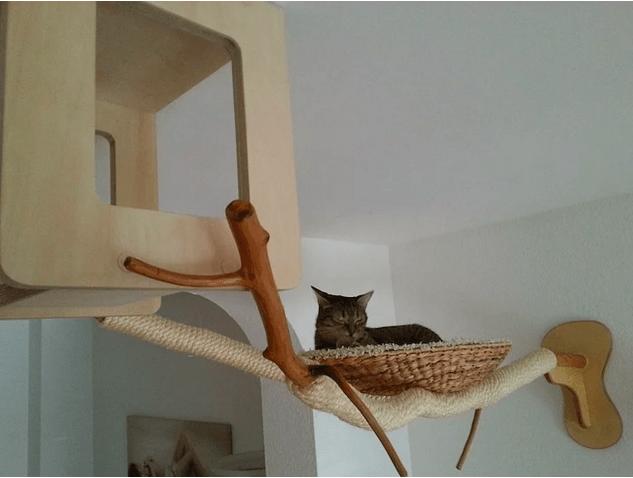 kedi-parkuru-10