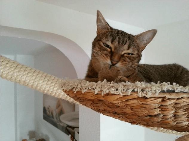 kedi-parkuru-11