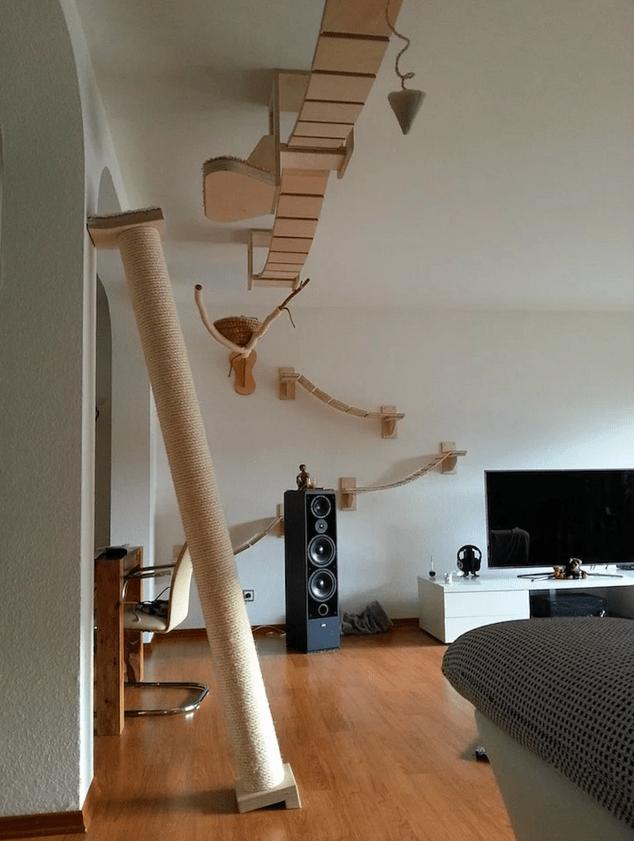 kedi-parkuru-3
