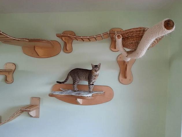 kedi-parkuru-8